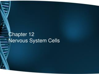 Chapter 12 Nervous System Cells
