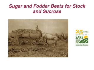 Sugar and Fodder Beets for Stock and Sucrose