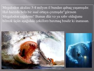 The-Megalodon