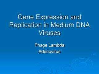 Gene Expression and Replication in Medium DNA Viruses