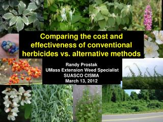 Comparing the cost and effectiveness of conventional herbicides vs. alternative methods