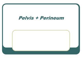 Pelvis  Perineum