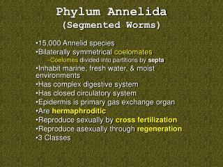 Phylum Annelida Segmented Worms