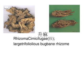 RhizomaCimicifugae( ? ); largetrifoliolious bugbane rhizome