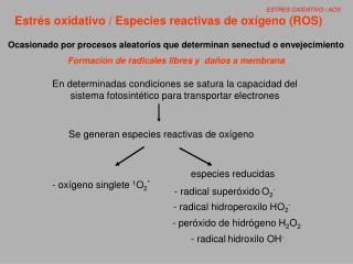 Estr�s oxidativo / Especies reactivas de ox�geno (ROS)