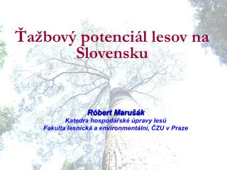 Ťažbový potenciál lesov na Slovensku