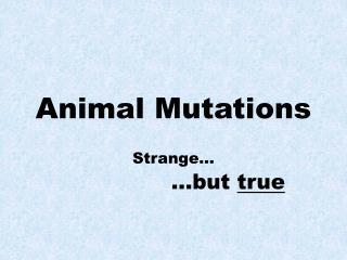 Animal Mutations
