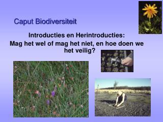 Caput Biodiversiteit