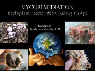 MYCOREMEDIATION Ecological Restoration Using Fungi