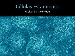 Células Estaminais: O elixir da Juventude