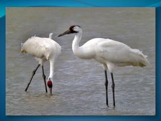 Тема проекта: «В мире птиц»