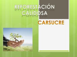 REFORESTACIÓN CALIDOSA