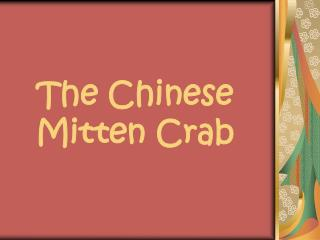The Chinese Mitten Crab