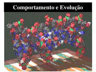 Comportamento e Evolução