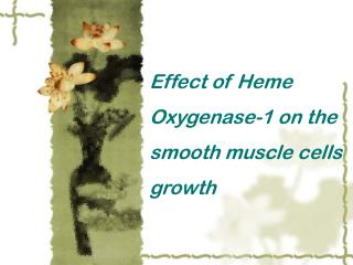 Effect of Heme Oxygenase-1 on the smooth muscle cells growth