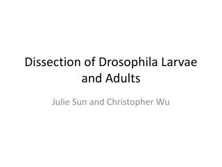 Dissection of Drosophila Larvae and Adults