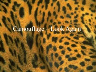 Camouflage   Look Again
