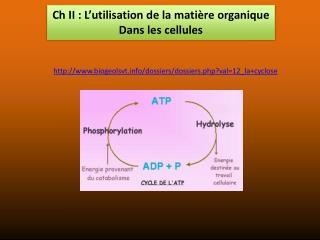 Ch  II : L'utilisation de la matière organique Dans les cellules