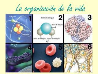 La organización de la vida
