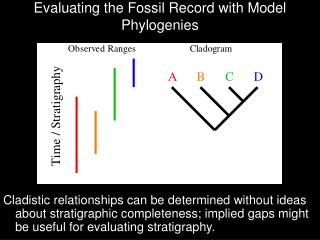 Evaluating the Fossil Record with Model Phylogenies