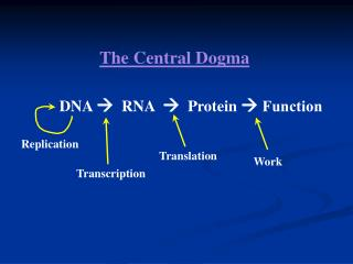DNA     RNA      Protein    Function