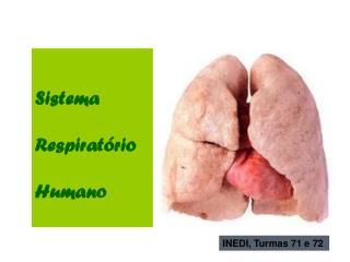 Sistema Respirat�rio Humano