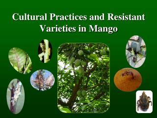 Cultural Practices and Resistant Varieties in Mango
