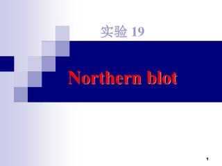 实验  19 Northern blot