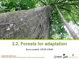 3.2. Forests for adaptation