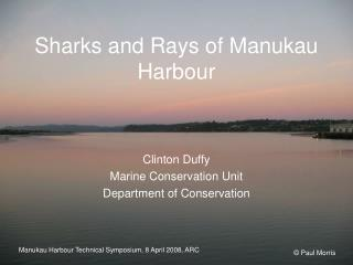 Sharks and Rays of Manukau Harbour