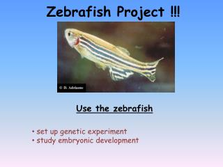 Zebrafish Project