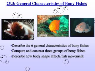 25.3: General Characteristics of Bony Fishes