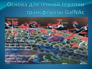 Основа для генной терапии  трансферазы GalNAc