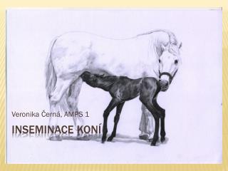 Inseminace koní