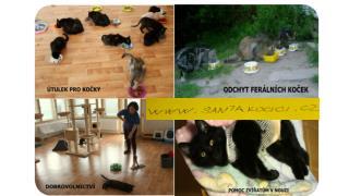Od roku 2006 jsme našli více než                   pro nalezené a opuštěné kočky