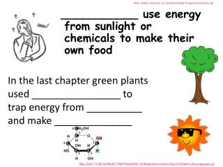 ___________ use energy from sunlight or chemicals to make their own food