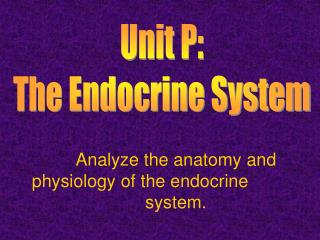 Analyze the anatomy and physiology of the endocrine system.