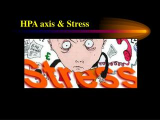 HPA axis & Stress