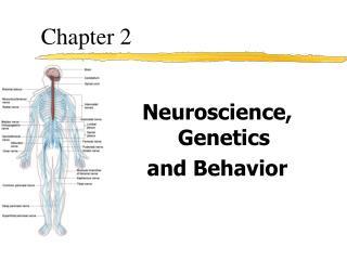 Neuroscience, Genetics and Behavior