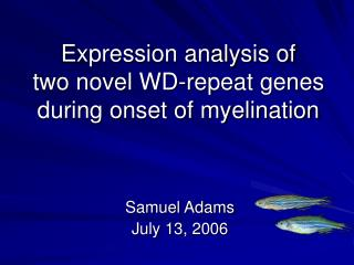Expression analysis of  two novel WD-repeat genes  during onset of myelination