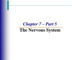 Chapter 7 – Part 5 The Nervous System