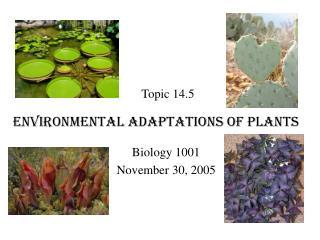 Environmental Adaptations of Plants