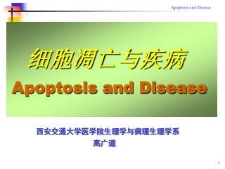 细胞凋亡与疾病 Apoptosis and Disease