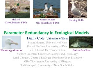 Parameter Redundancy in Ecological Models