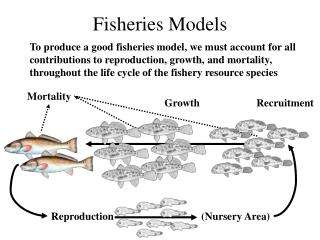 Fisheries Models