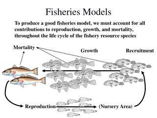 Fisheries Models