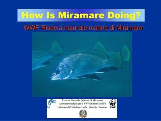 WWF-Riserva naturale marina di Miramare