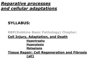 Reparative processes  and cellular adaptations