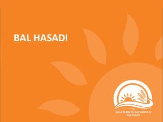 BAL HASADI