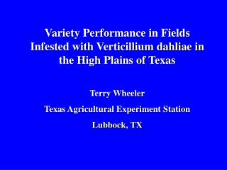 Variety Performance in Fields Infested with Verticillium dahliae in the High Plains of Texas